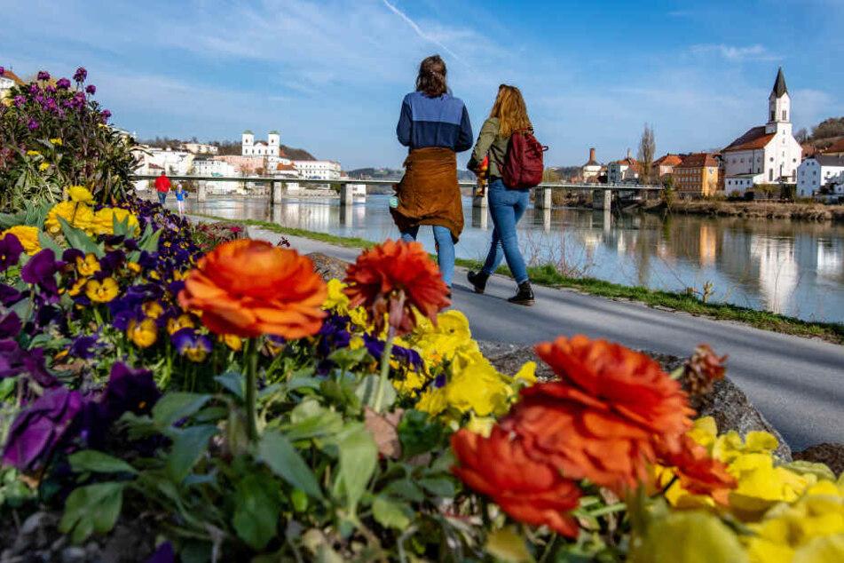 Spaziergänger gehen am Innufer in Passau an blühenden Blumen vorbei.