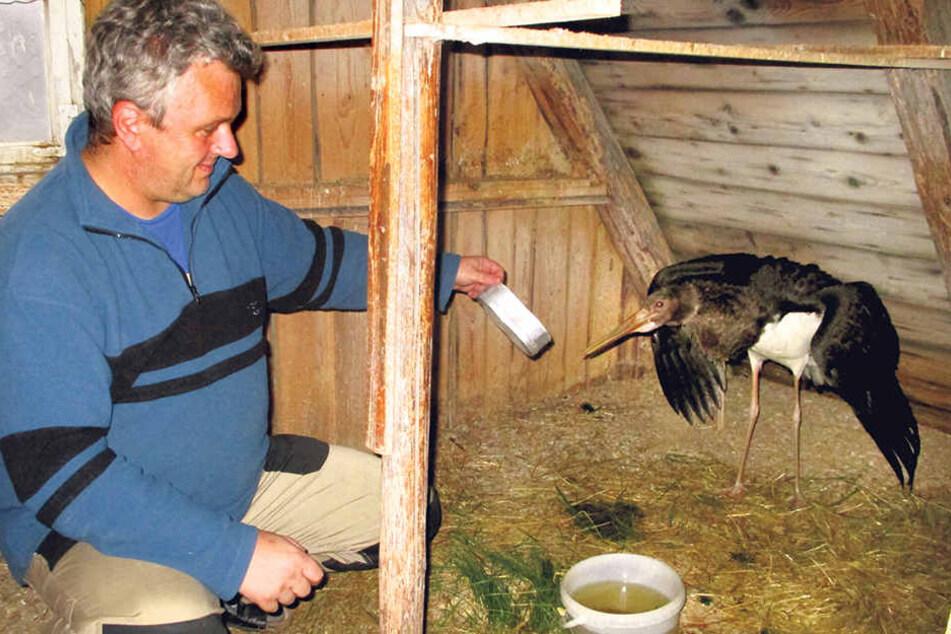 Michael Hunger wollte dem Vogel Asyl bieten.