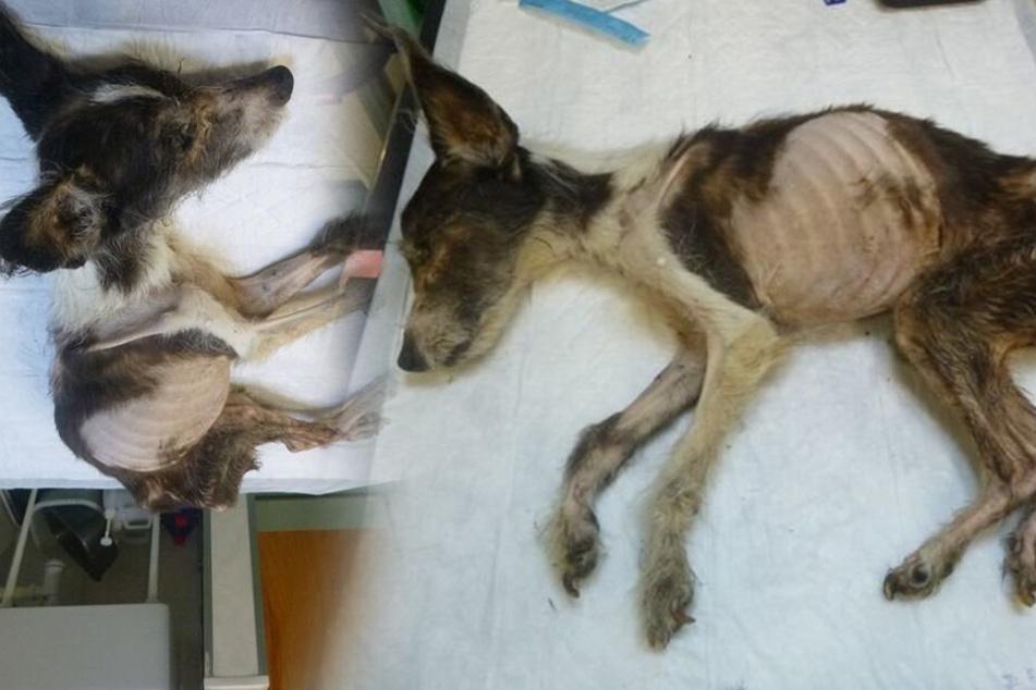 """Tierschützerin ist geschockt über verwahrlosten Hund: """"Schlimmster und unvorstellbarster Zustand"""""""