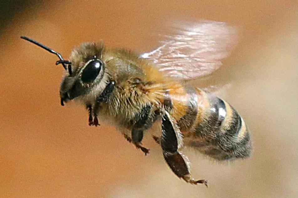 Eine Biene im Flug.