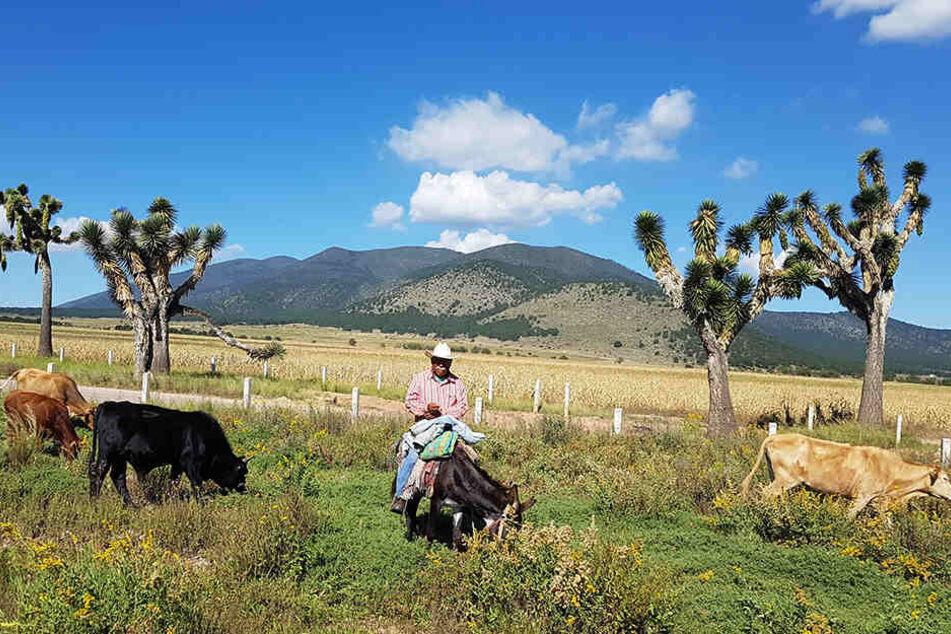 Begegnung am Wegesrand: Bei Monterrey (Mexiko) suchte Robby das Gespräch mit einem Bauern.