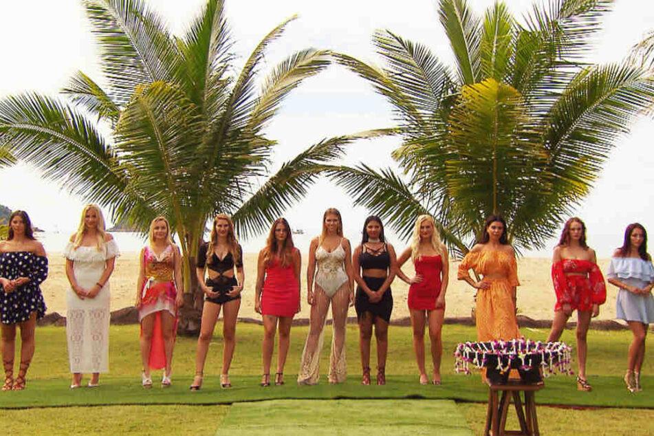 Neben Michelle (4.v.l.) sind auch zehn andere sexy Single-Ladys in Flirtlaune.