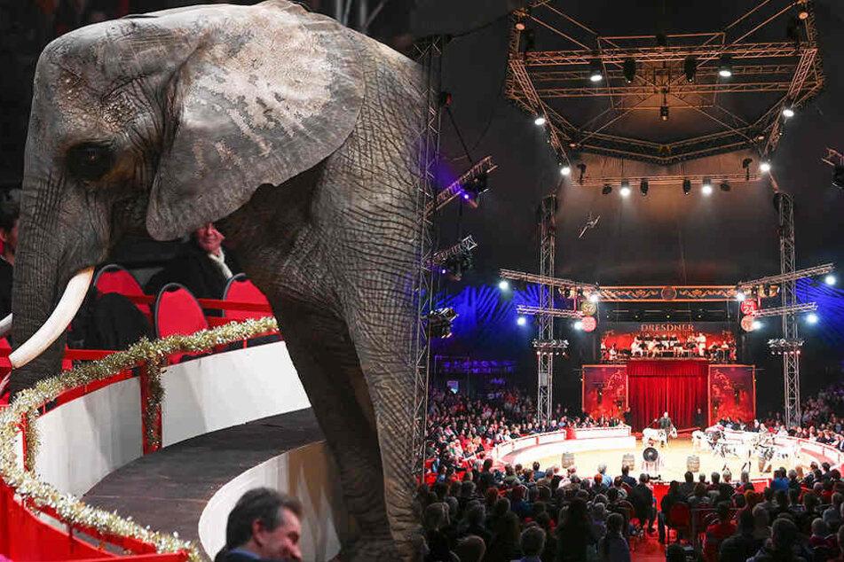 Saison beendet: So viele Zuschauer besuchten den Weihnachts-Circus