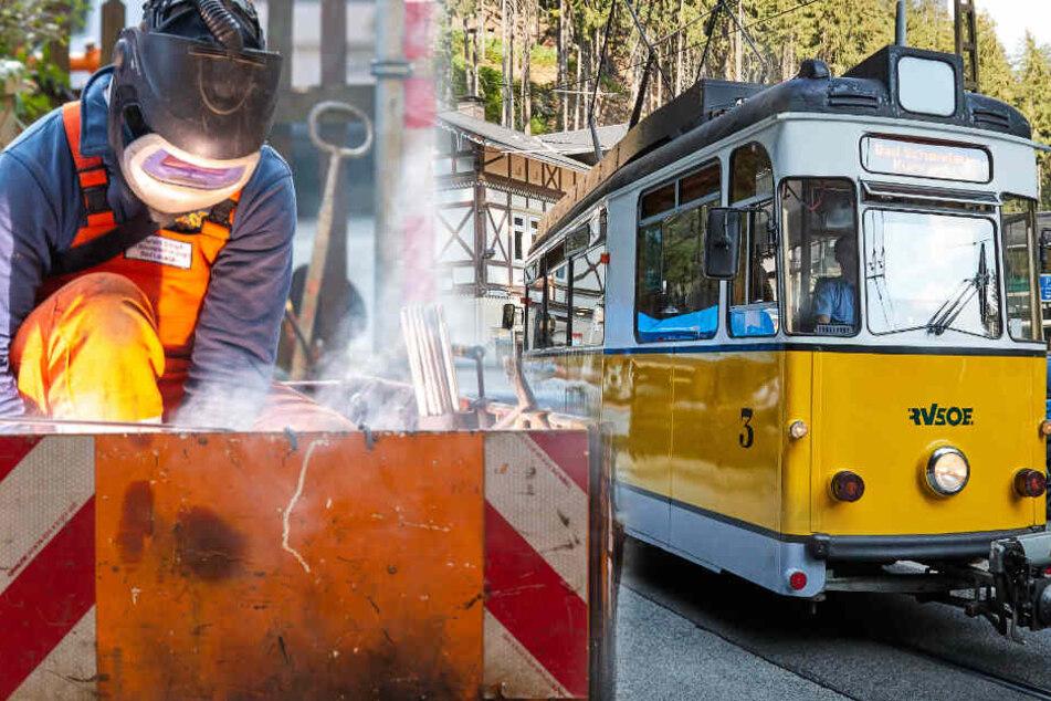 Dresden: Gleisbau an der Kirnitzschtalbahn: Pendelt die gelbe Bimmel bald über die Elbe?