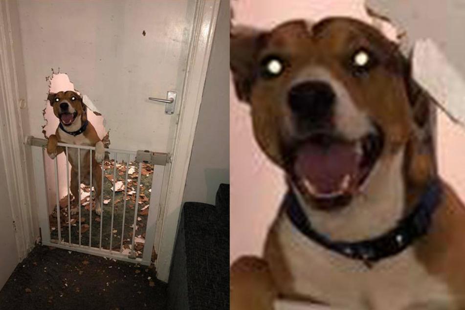 Hund Benny war in der Abwesenheit seiner Besitzerin fleißig.