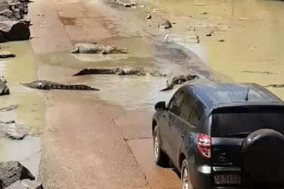 Durch die vielen Reptilien kam das Auto zum Stoppen, was durch den schnellen Gezeitenwechsel am Cahills Crossing gefährlich hätte werden können.