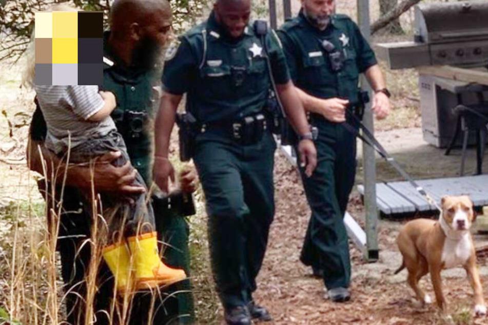 Hund wird zum Helden: Junge (3) verirrt sich im Wald, dann rettet ihn dieser Vierbeiner!