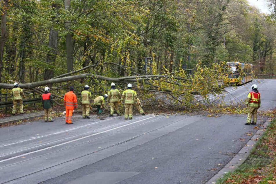 Rettungskräfte versuchen den Baum von den Leitungen zu bewegen.