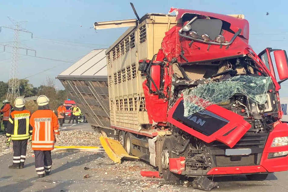 Tiertransporter kracht auf Autobahn in Stauende