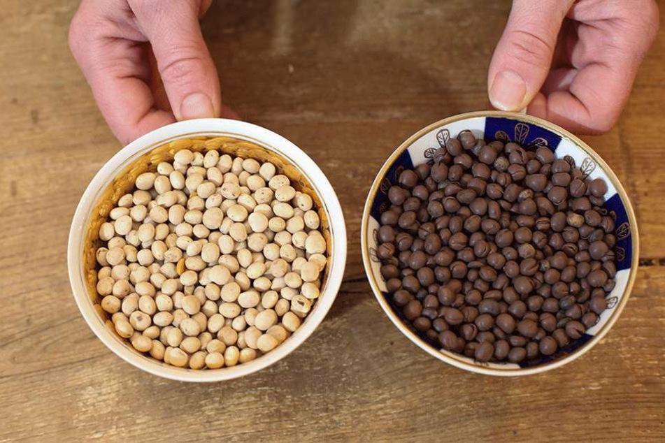 Roher (li.) und gerösteter Kaffee.
