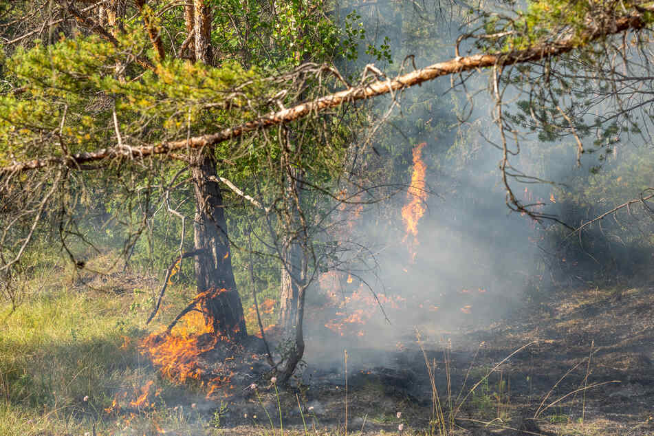 Trockene Nadelbäume und Gräser begünstigten die Ausbreitung des Feuers.