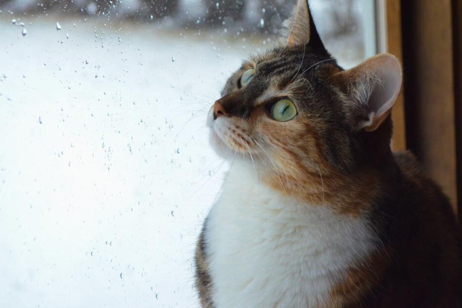 Ab wie viel Grad dürfen Katzen im Winter nicht mehr raus?