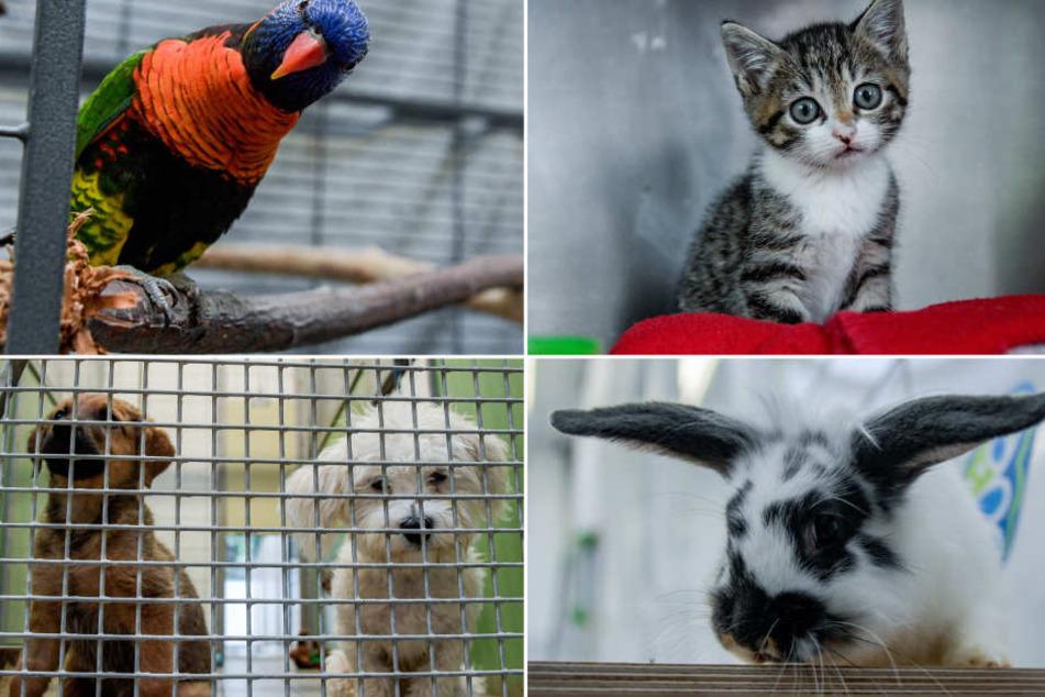 Diese Tiere wurden alle innerhalb der letzten vier Wochen in Hamburg ausgesetzt.