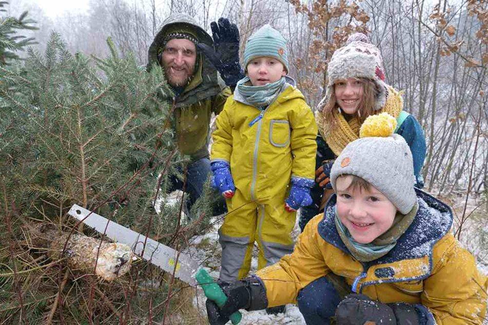 Unser selbstgefällter Weihnachtsbaum! Familie Kunze mit Jonte (5), Emma (11), Thore (3, v.r.n.l.) und Vati Sebastian Fehrmann (39, l.) freut sich.