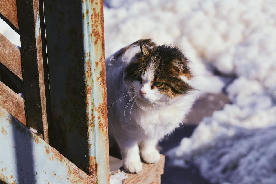 Freigänger-Katzen haben besonders im Winter einen größeren Appetit.