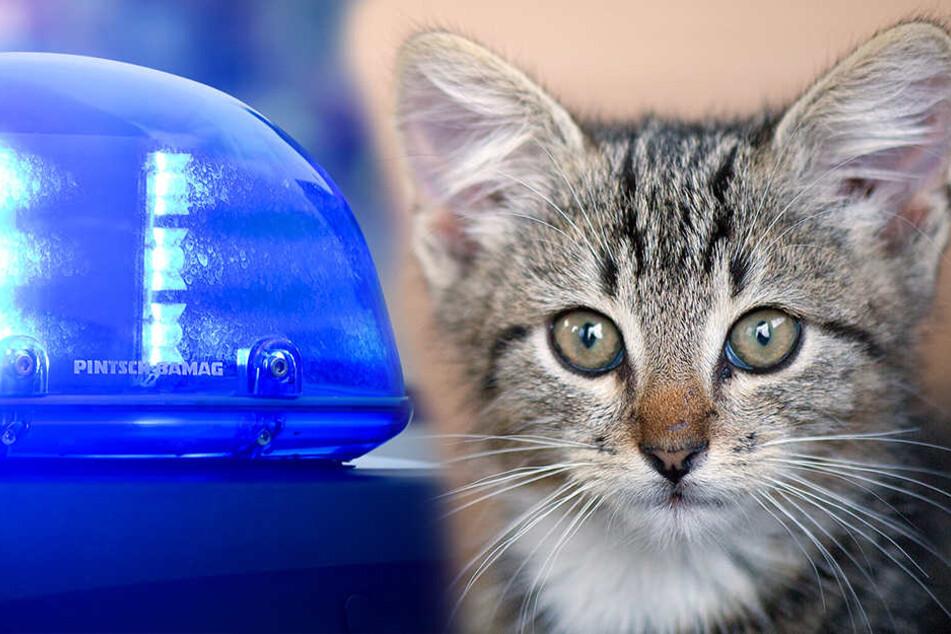 Ungefähr 16 000 Euro Schaden für die Rettung einer Katze (Symbolbilder)