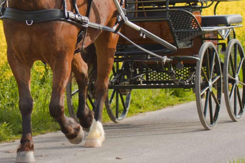 Pferd geht durch: Kutschfahrt wird zur Horror-Tour