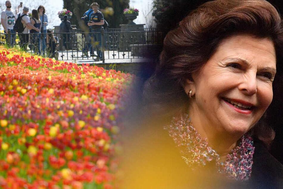 Darum kommt Königin Silvia bald zu uns nach Deutschland!