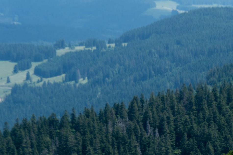 Die Schüler verlaufen sich bei Wanderung im Schwarzwald: Doch ein SOS-Signal rettet sie. (Symbolbild)