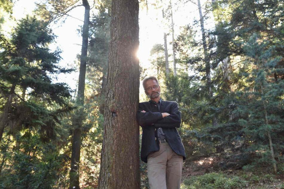 Die nächsten Jahre werden für unsere Bäume ein Riesen-Problem