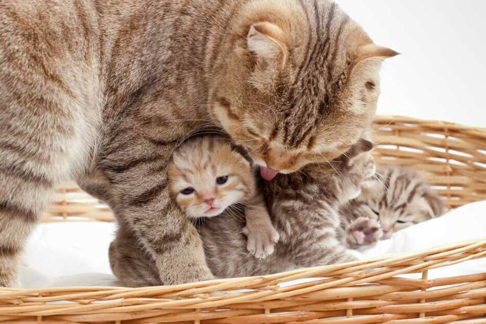 When the time comes, a cat will look for the best place to give birth.