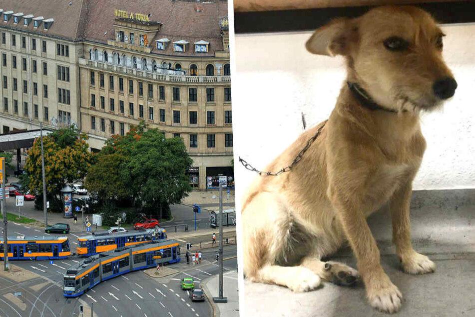 Italienerin Valentina fand verlassenen Struppi auf Tram-Gleisen