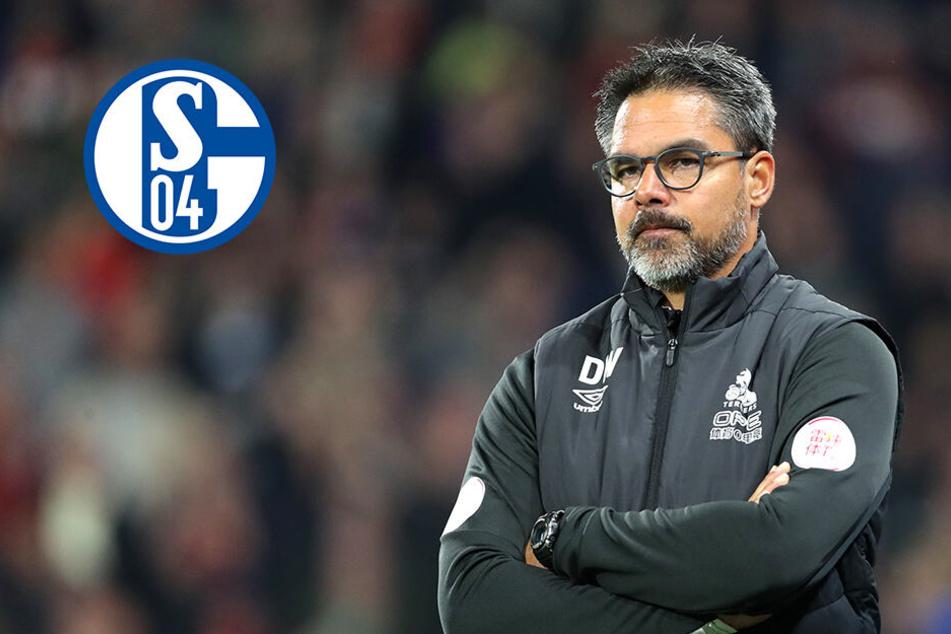 Fix: Schalke holt neuen Coach für kommende Saison