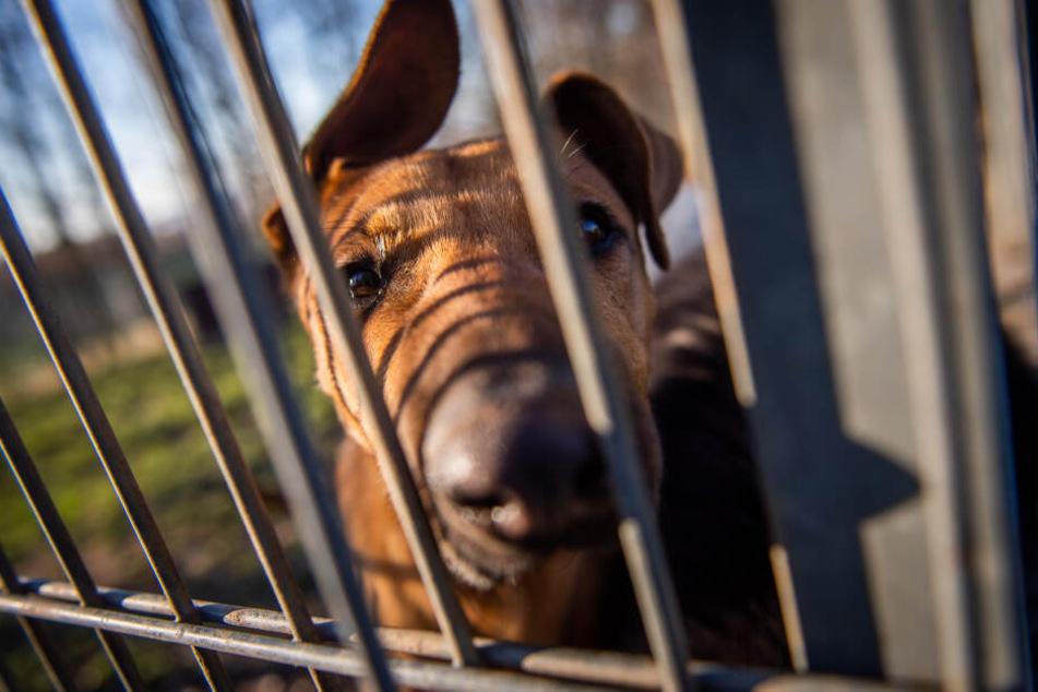 Wenn ein Hund gefunden wird, sollte das Tierheim informiert werden.