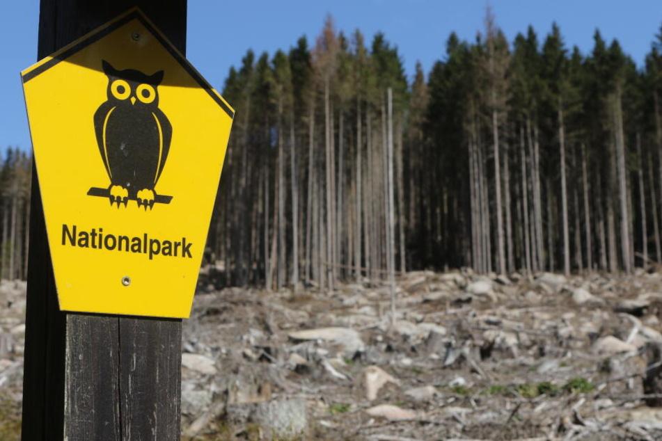 In den trockenen Wäldern im Nationalpark Harz herrscht derzeit Waldbrandstufe 3.