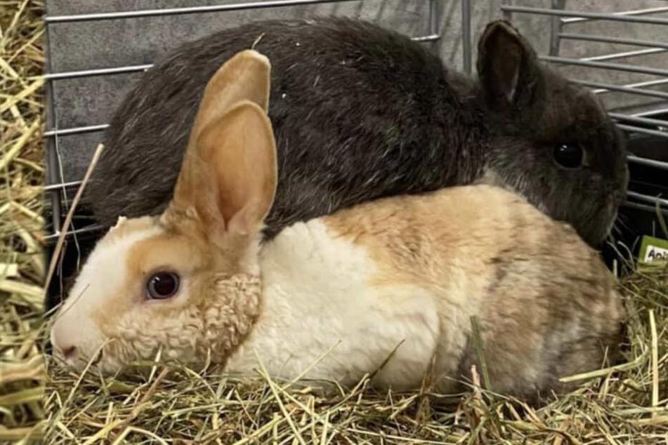 Herzlos-Aktion bei Eiseskälte: Kaninchen-Gruppe am Waldrand abgeladen