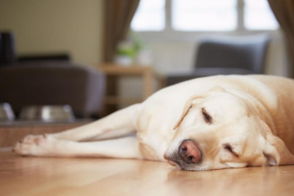 Schüsse fallen: Polizei stürmt Wohnung und erschießt Hund