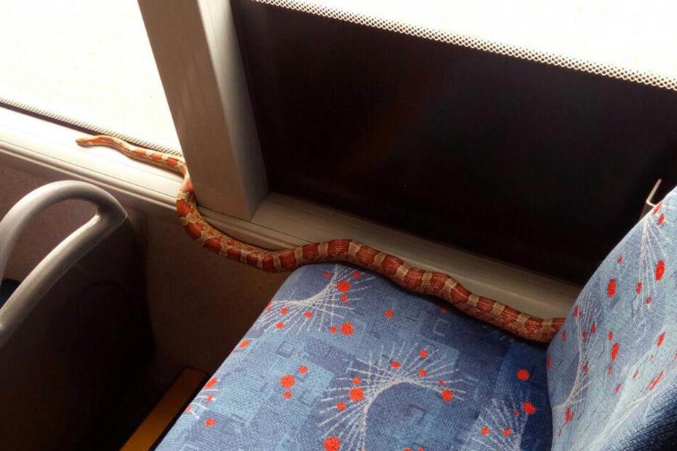 Kommt ziemlich selten vor: Eine Schlange im Bus.