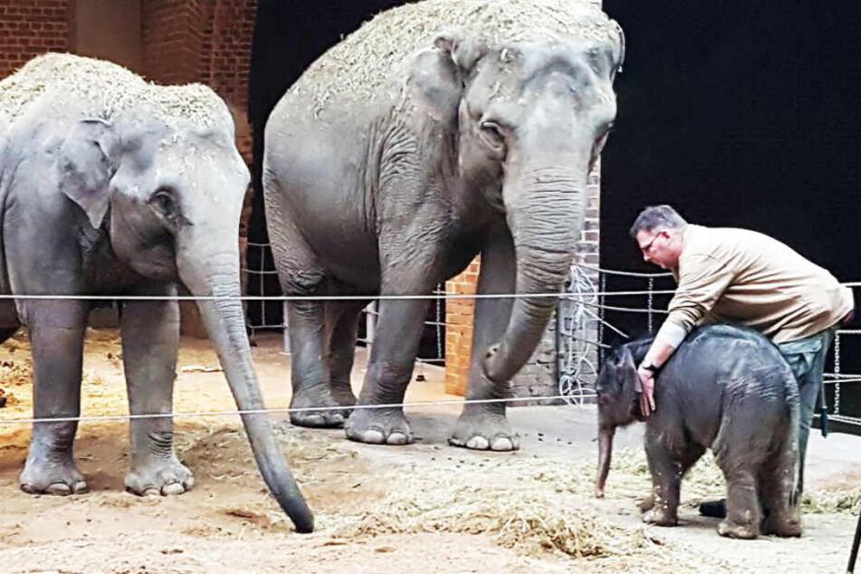 """Elefant, Tiger & Co."": Große Sorgen um Elefantenbaby im Leipziger Zoo"