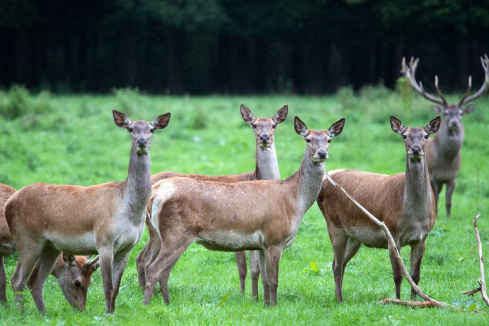 Die Tiere sind dadurch auch anfälliger für Krankheiten (Symbolfoto).