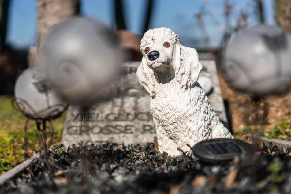 Seit 1934 werden in Bad Homburg Tiere beigesetzt.