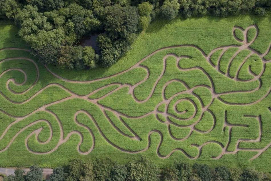 So sieht das Muster des Labyrinths von oben aus.