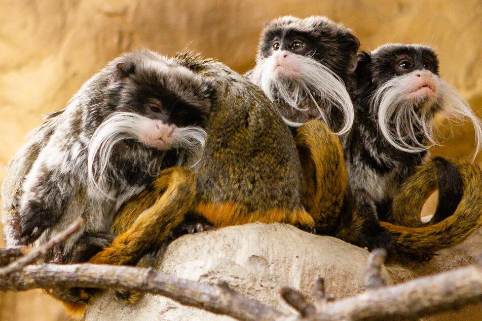 Tierparks vor der Wiederöffnung: Besucheransturm aus Hamburg erwartet