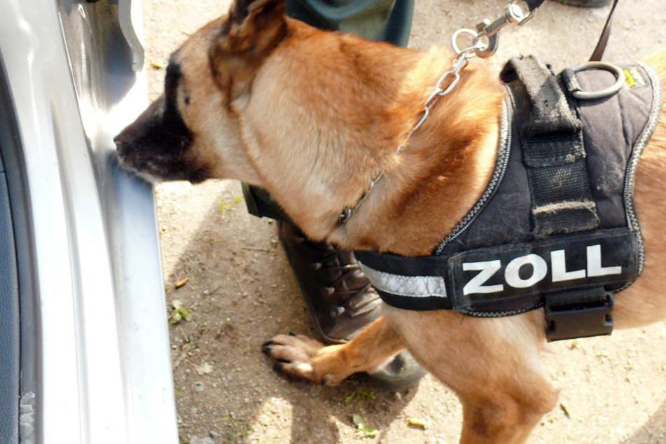 Bei einer Kontrolle schlug der Drogenspürhund der Polizei an. (Symbolbild)