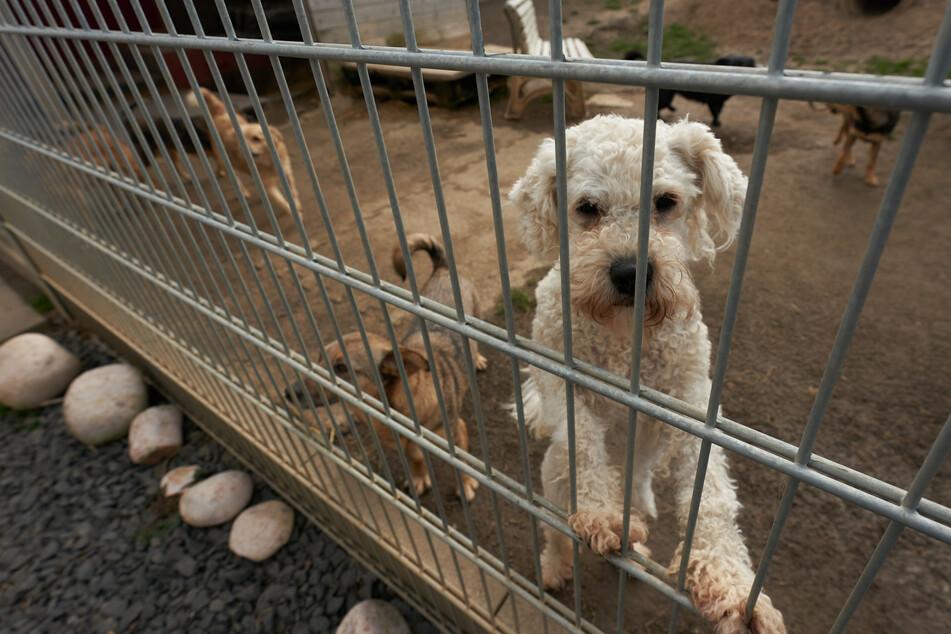 Gerade in Corona-Zeiten wünschen sich viele ein Haustier. Doch wer im Tierheim nicht sofort eines bekommt, der wird mitunter auch mal aggressiv. (Symbolbild)