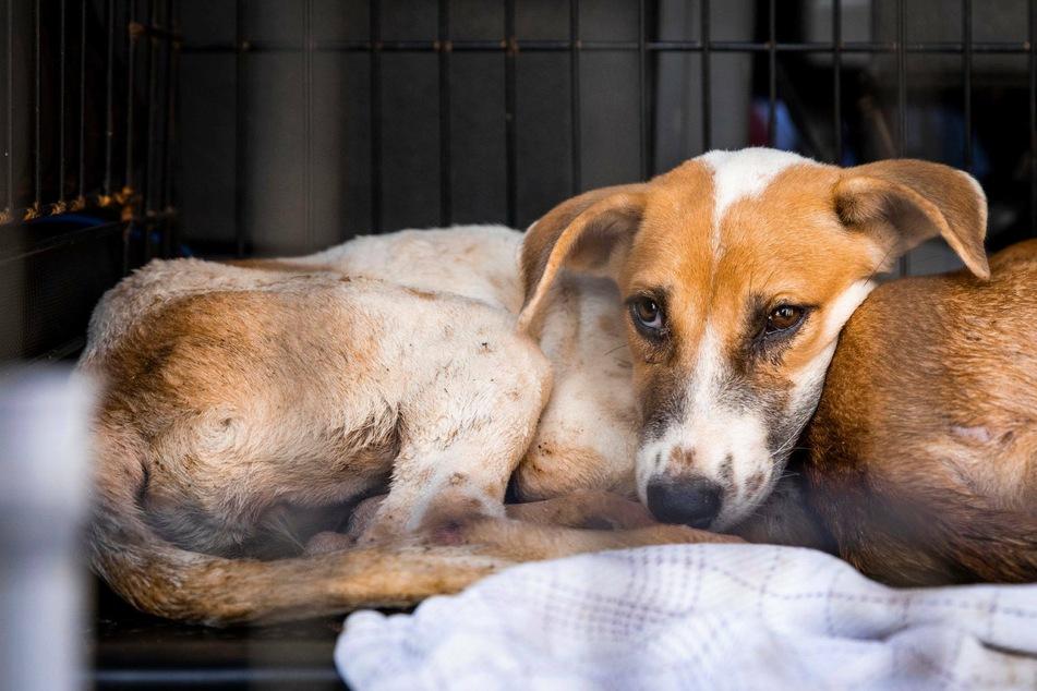 Hund soll im Wassertank qualvoll ertränkt werden, dann ändert sich alles
