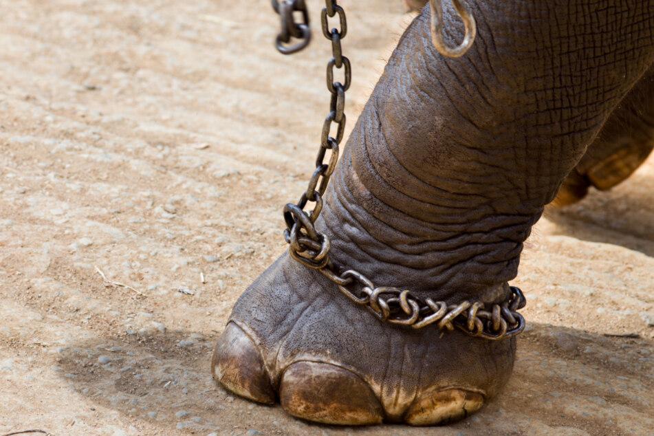 """""""World Animal Protection"""": """"Die Methoden, mit denen Tiere aus ihren natürlichen Lebensräumen gerissen werden, sind für sie äußerst belastend und können zu Verletzungen und sogar zum Tod führen."""""""