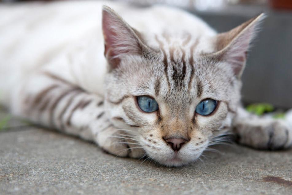 Haustiere werden mit Beginn der Ferien herzlos ausgesetzt werden.