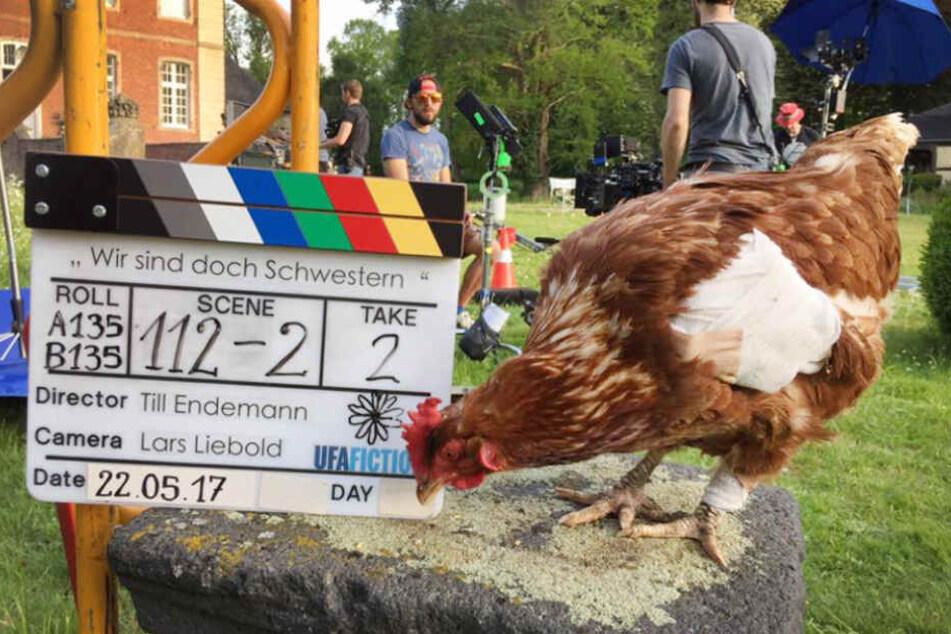 Das Huhn Sieglinde bei Dreharbeiten zu einem Film (Foto vom 22.05.2017).
