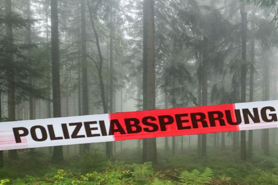 In einem Waldstück in der Dölauer Heide wurde der Tote gefunden (Symbolbild).