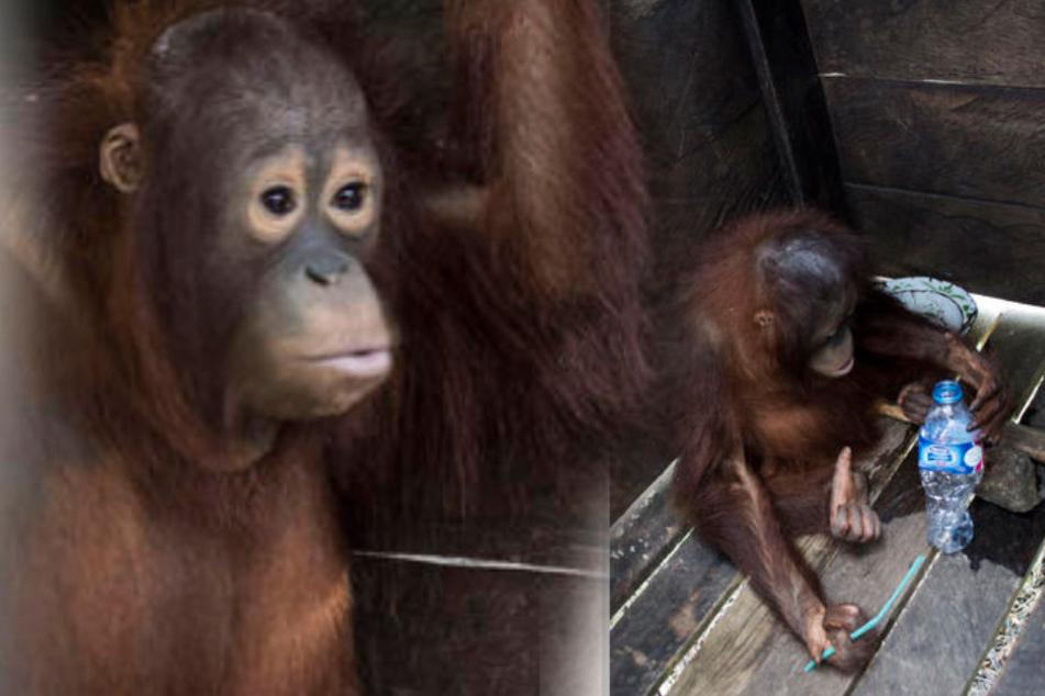 Tierschützer hatten bereits schon einmal versucht, das Tier freizubekommen. Jetzt ist es gelungen!