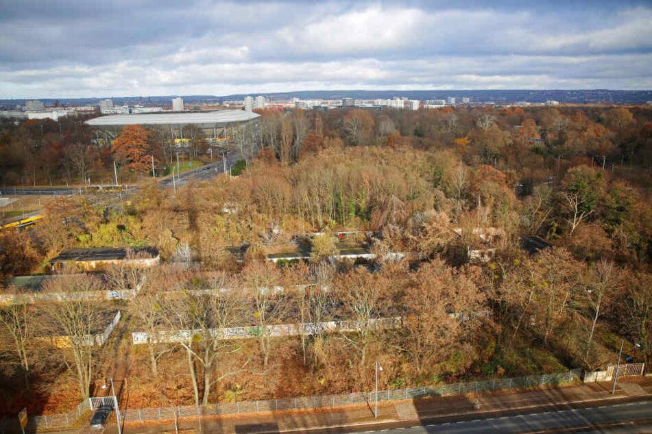 Die Fläche am Lénneplatz ist in den letzten Jahren stark verwildert.