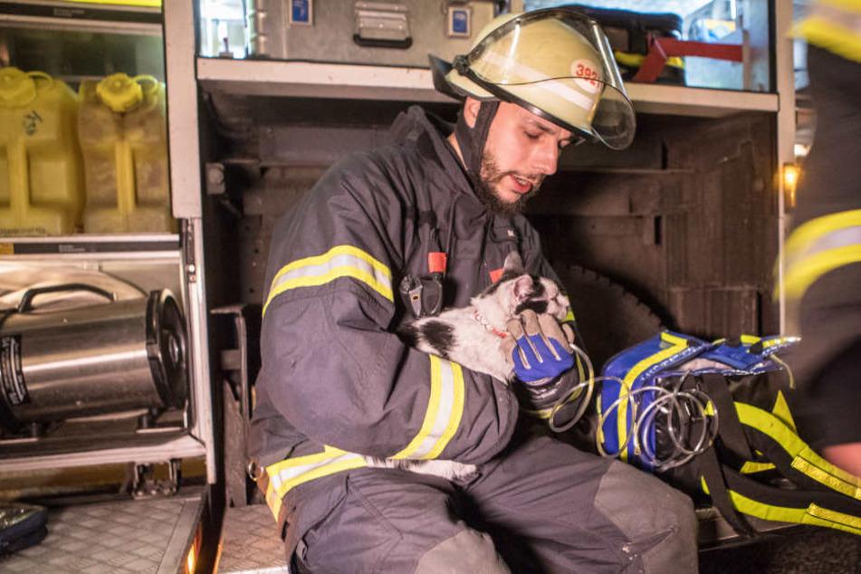 Ein Feuerwehrmann kümmerte sich nach der Rettung um die entkräftete Katze.