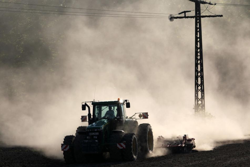 Das Getreide war in Sachsen gut über den Winter gekommen. Doch der April brachte Kälte und Trockenheit.