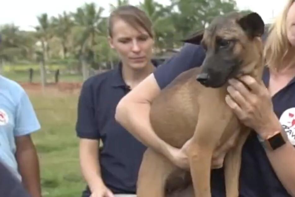 Mann tötete Tausende Hunde! So clever wurde er jetzt gestoppt