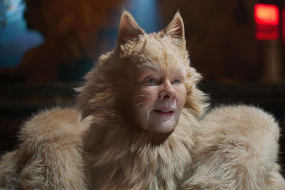 Die Old Deuteronomy (Judi Dench) führt die Jellicle-Katzen mit viel Weisheit an.